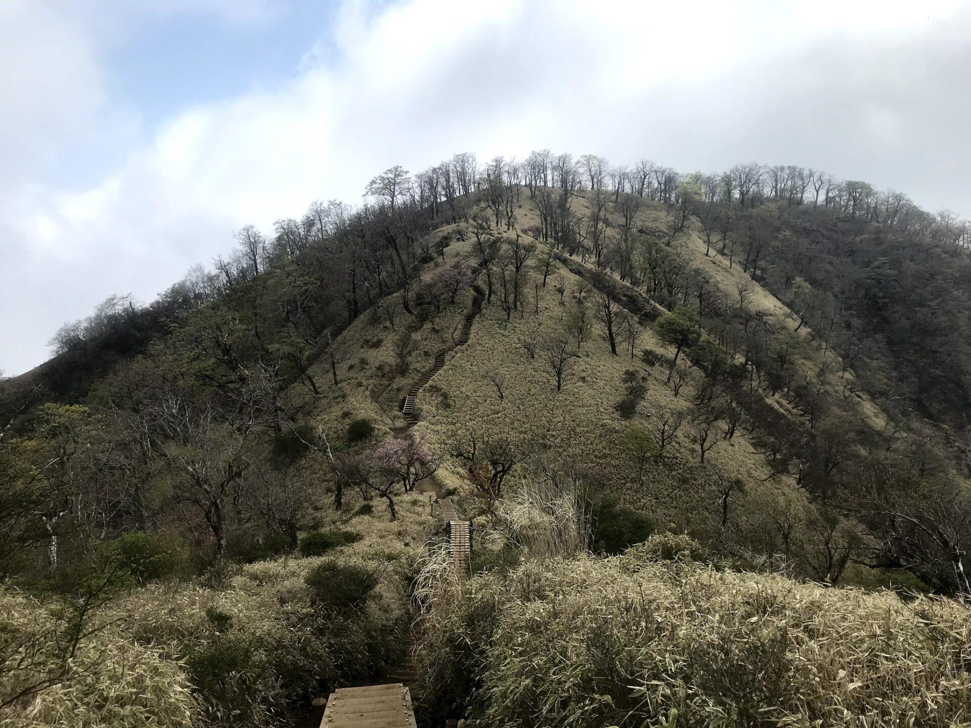 丹沢山 - 蛭ヶ岳の間のカワイイ風景
