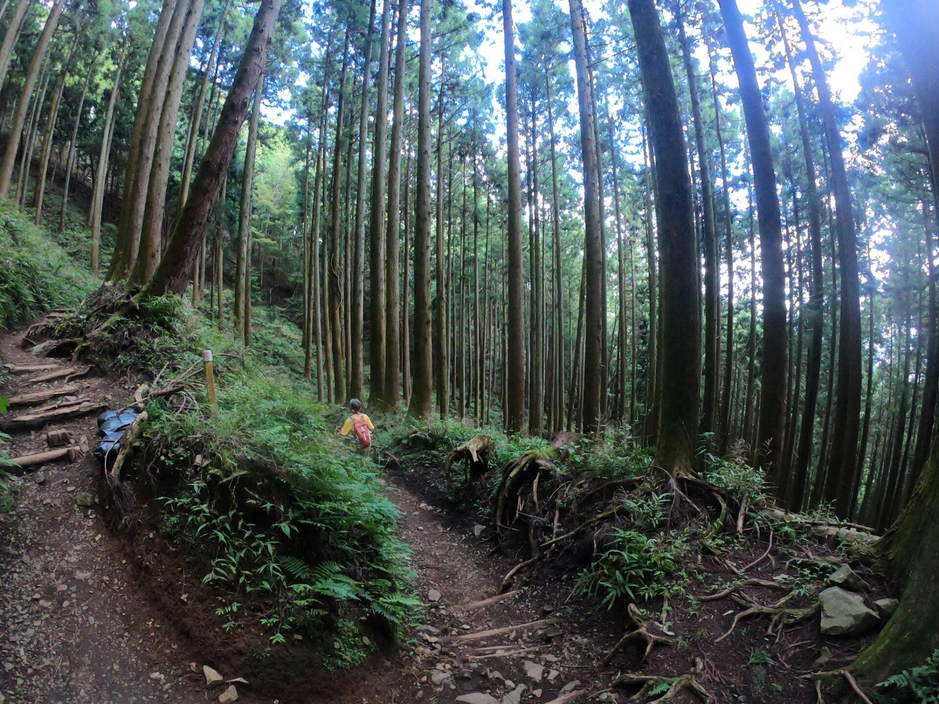 大倉尾根のノーマルな登山道