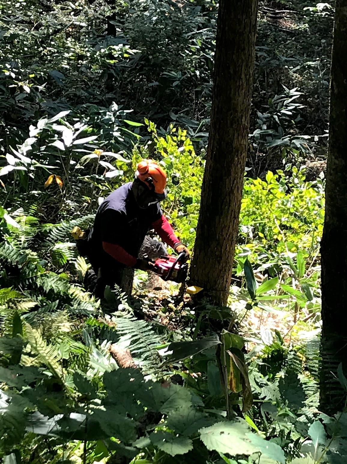 チェンソーを使って木を切るフォレストワーカー